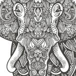 Erfolgsbericht Elefant